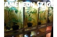 Kaméleon megőrzés - Kaméleon panzió - előnézeti képe